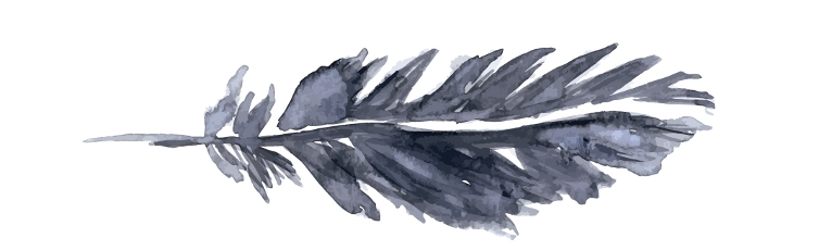 black feather watercolor